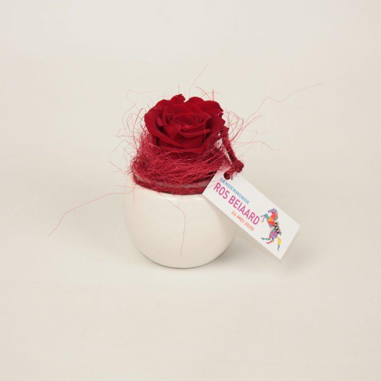 ros beiaard potje met roos